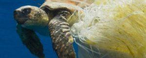 Ocean_rescue_plasti_pollution